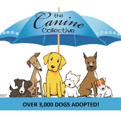 Canine Collective