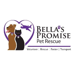 Bella's Promise Pet Rescue